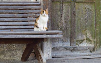 Waarom een kat uit de buurt voor de deur zit